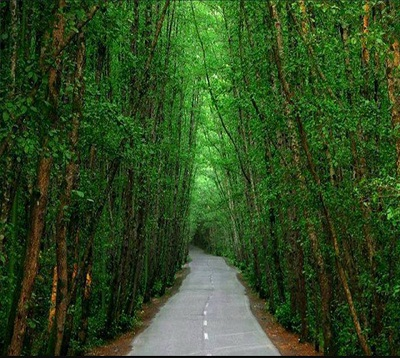 غابات كيسو