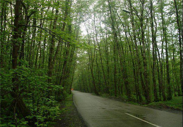غابة كيسوم
