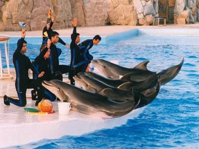 حديقة الدلافين جزيرة كيش