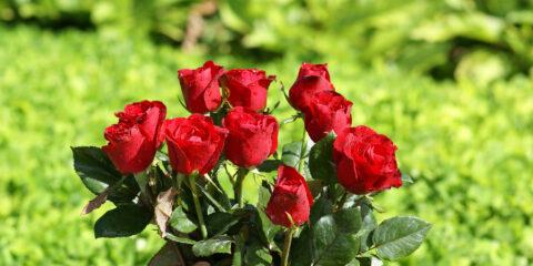 الوردة الفارسية سیاحت ایران